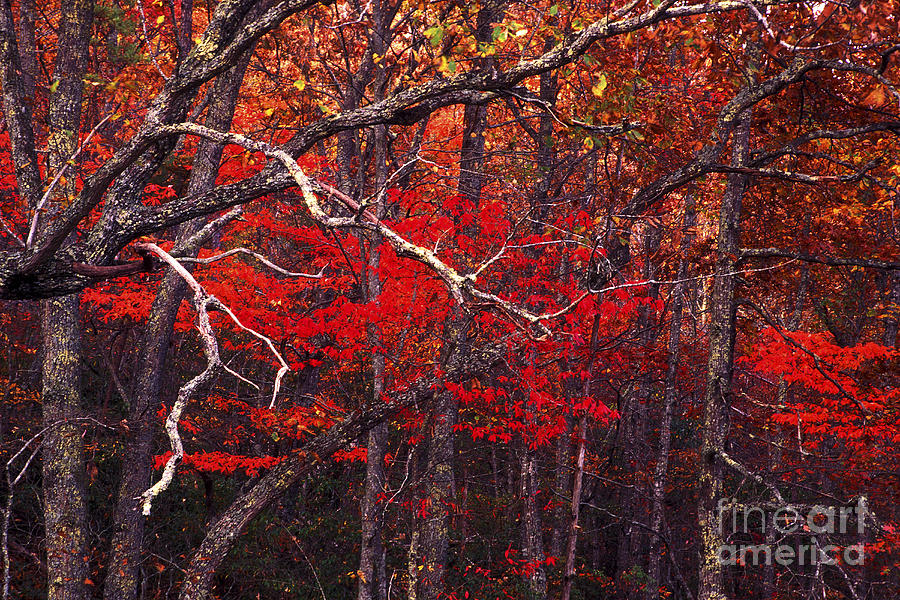 The Woods Aflame In Red Photograph