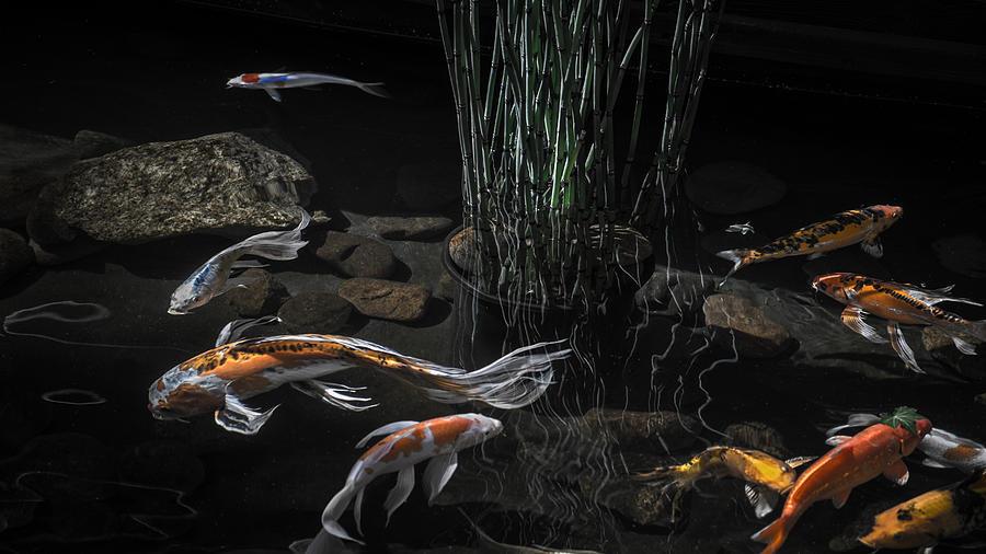 The zen of koi photograph by glenn dipaola for Koi zen facebook