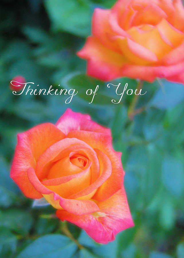 Thinking Of You Rose Card Photograph by Amy Kerschner