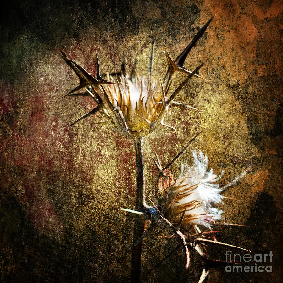 Thorns Photograph