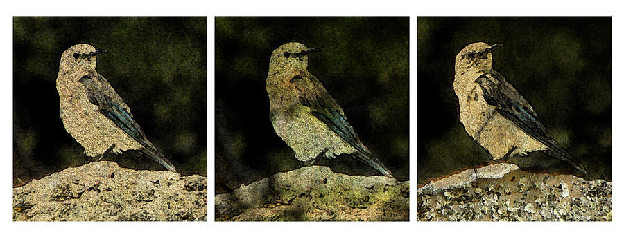 Three Birds Photograph  - Three Birds Fine Art Print