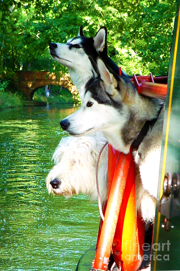 Three Dogs On A Boat Photograph