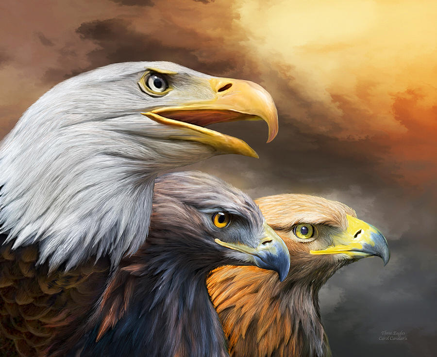 Eagle Mixed Media - Three Eagles by Carol Cavalaris