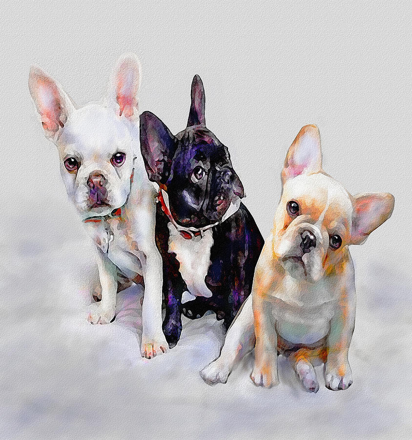Three Frenchie Puppies Digital Art  - Three Frenchie Puppies Fine Art Print