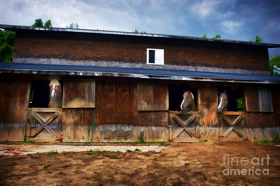Three Horses In A Barn Photograph