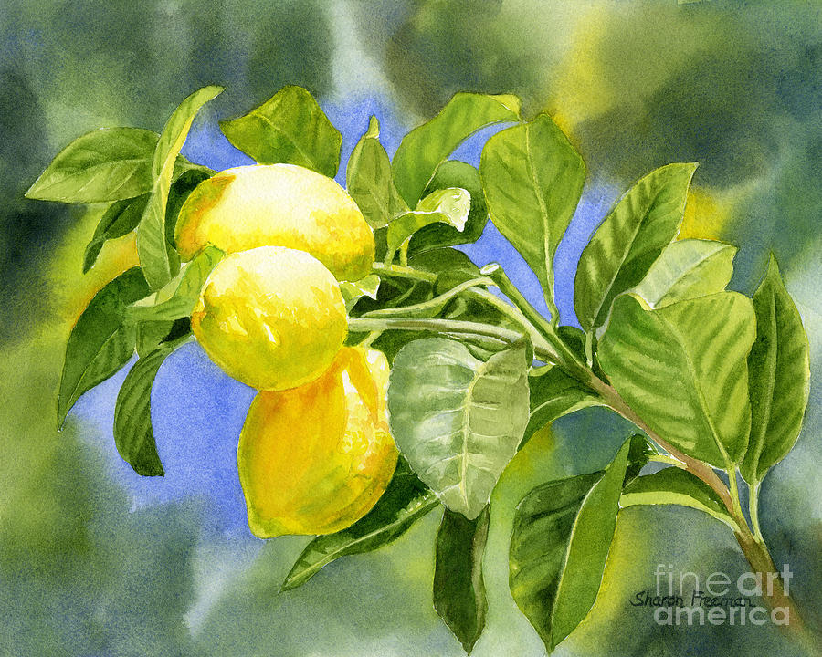 Three Lemons Painting  - Three Lemons Fine Art Print
