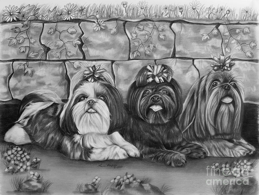 Three Little Shih Tzus Drawing  - Three Little Shih Tzus Fine Art Print