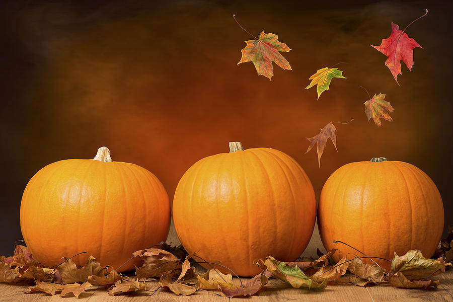 Three Pumpkins Photograph
