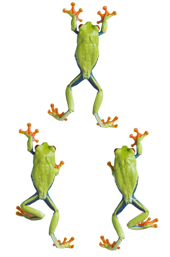 Climbing Tree Frog Drawings