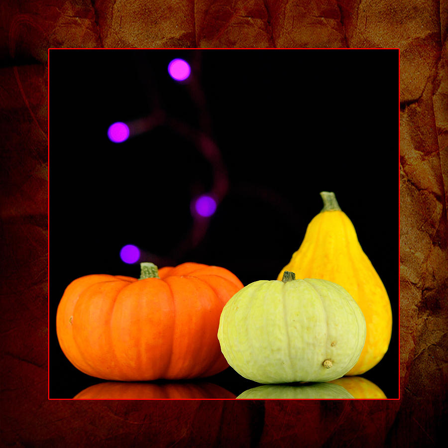 Three Small Pumpkins Photograph