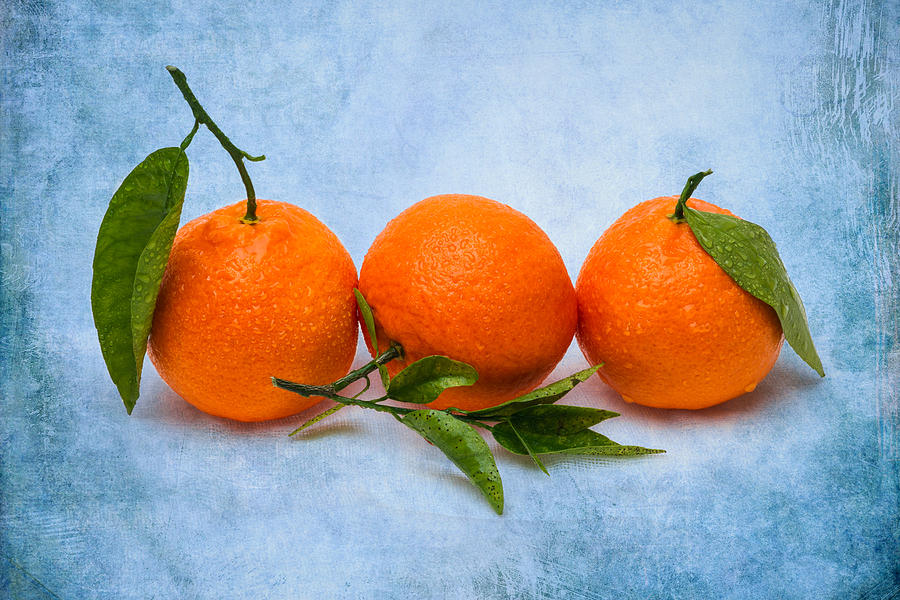 Three Tangerines Photograph