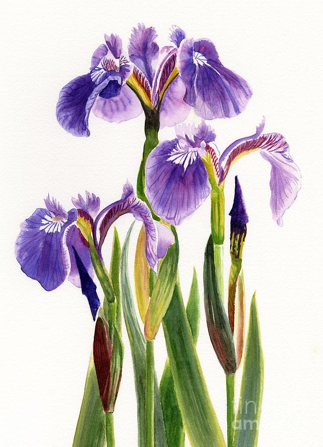 Three Wild Irises On White Painting
