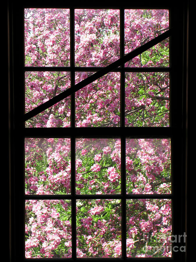 Through An Old Window Photograph  - Through An Old Window Fine Art Print