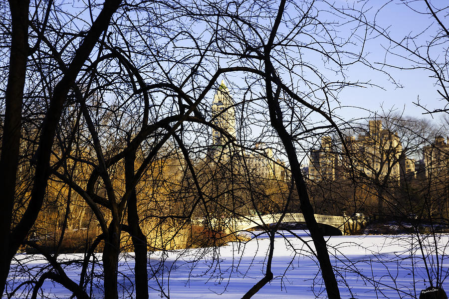 Bridge Photograph - Through The Branches 3 - Central Park - Nyc by Madeline Ellis