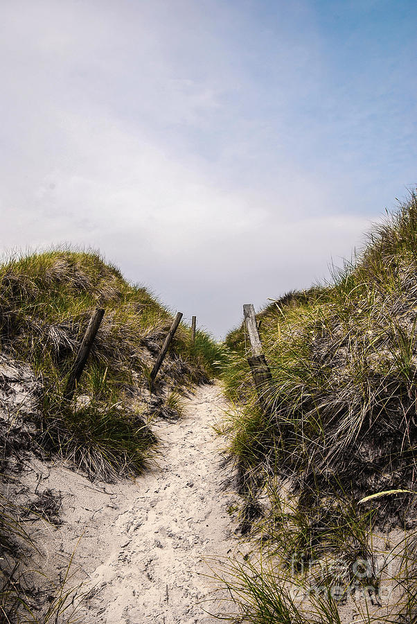Through The Dunes Photograph  - Through The Dunes Fine Art Print