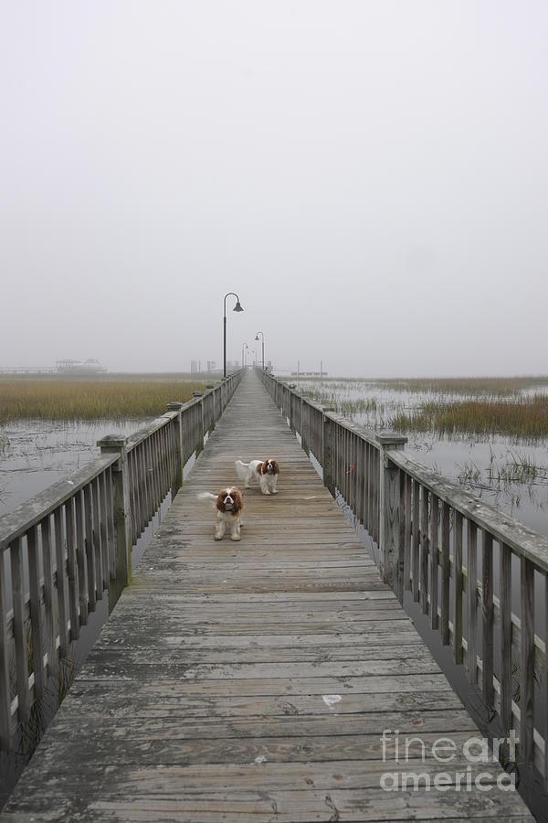 Through The Fog Photograph
