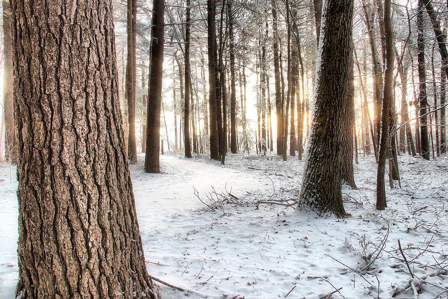 Thru The Pines Photograph
