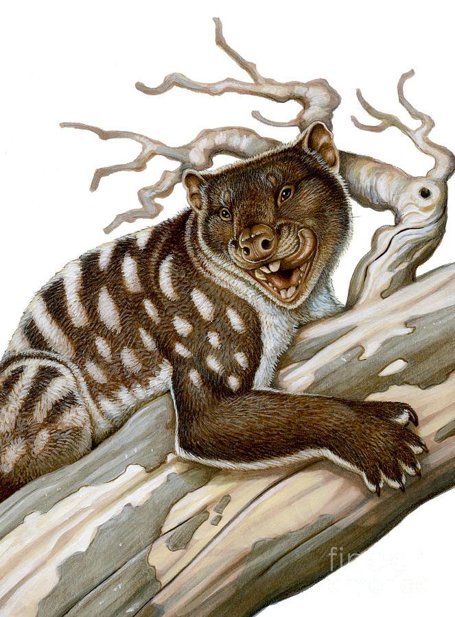 thylacoleo a marsupial lion marsupial lion