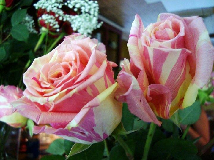 Tie-Dye Roses