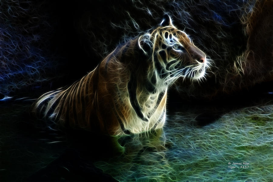 - tiger-3837-f-james-ahn