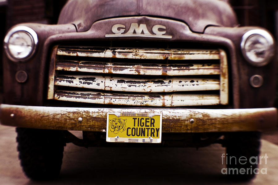 Tiger Country - Purple And Old Photograph  - Tiger Country - Purple And Old Fine Art Print