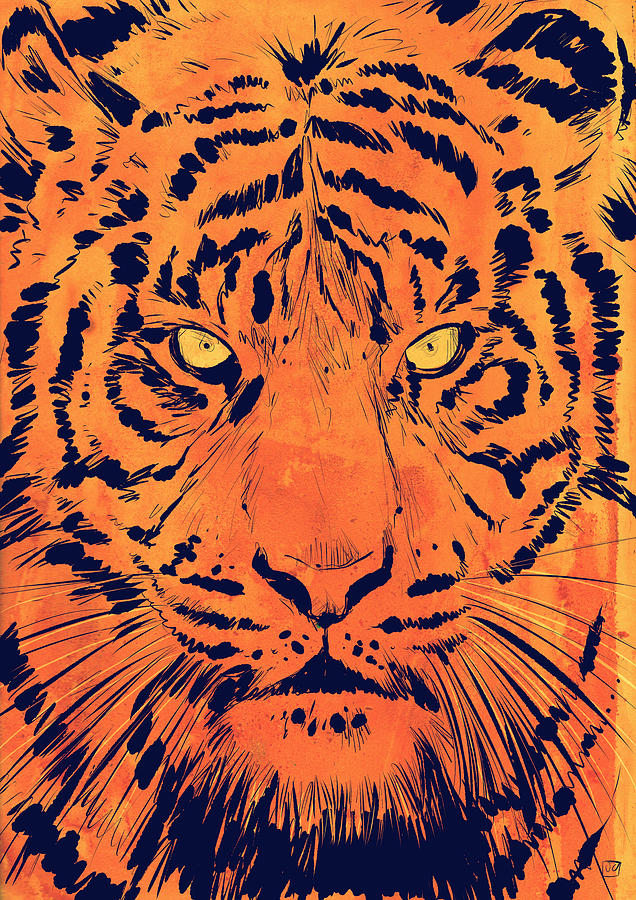 Tiger Drawing  - Tiger Fine Art Print
