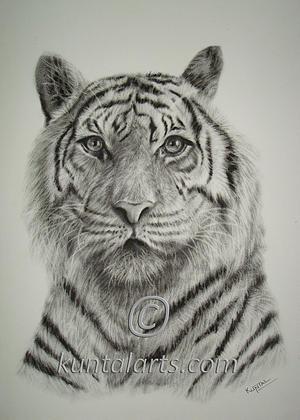 Tiger Mixed Media