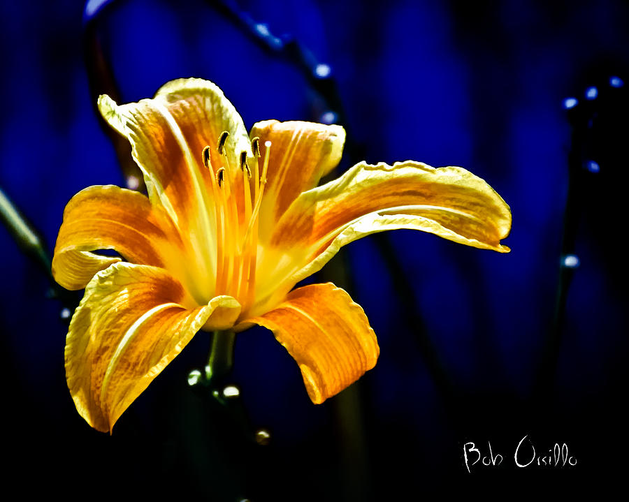 Tiger Lily On Waters Edge Photograph  - Tiger Lily On Waters Edge Fine Art Print