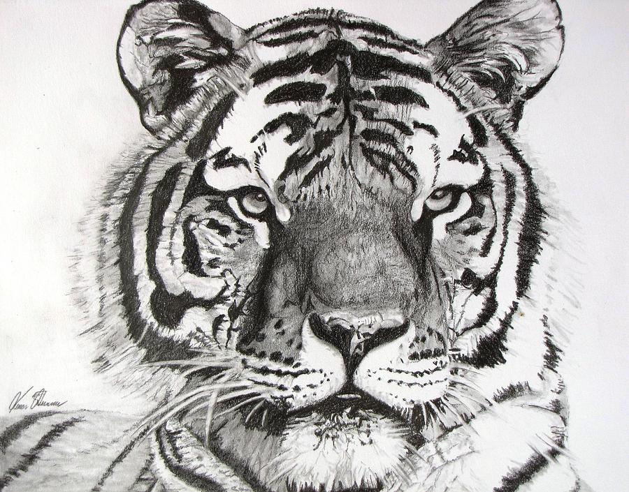 Tiger On Piece Of Paper Drawing