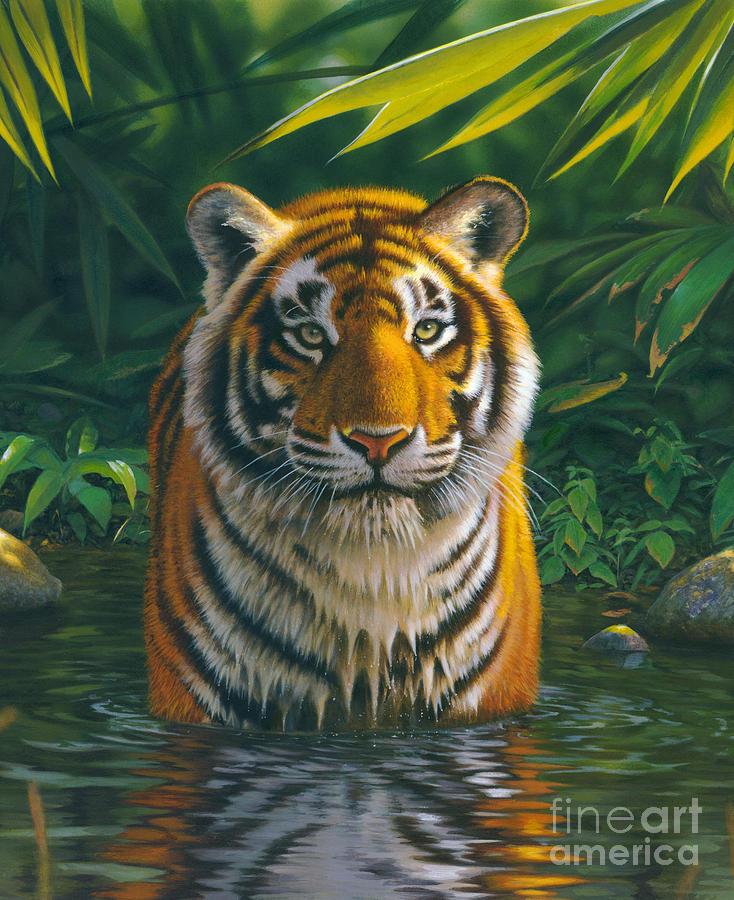 Tiger Pool Photograph