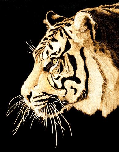Tiger Profile Drawing