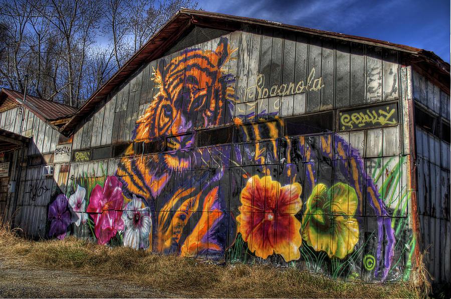 Tiger Tiger Photograph