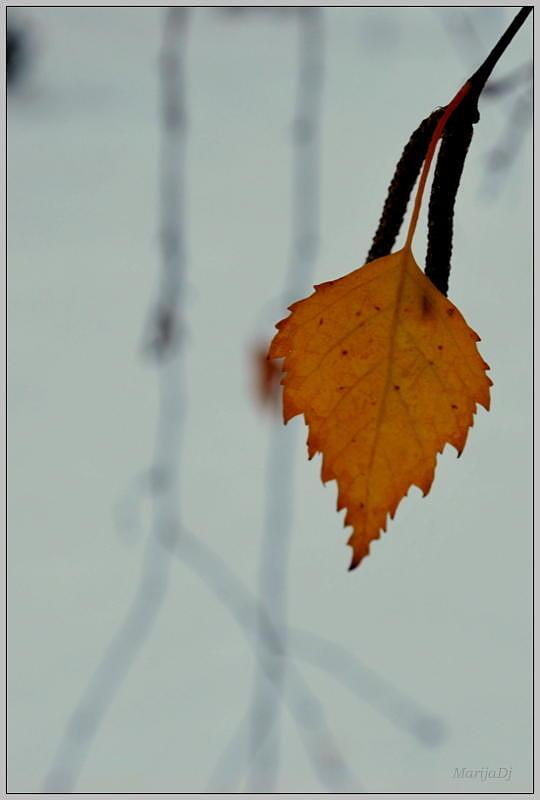 Tiny Birch Photograph