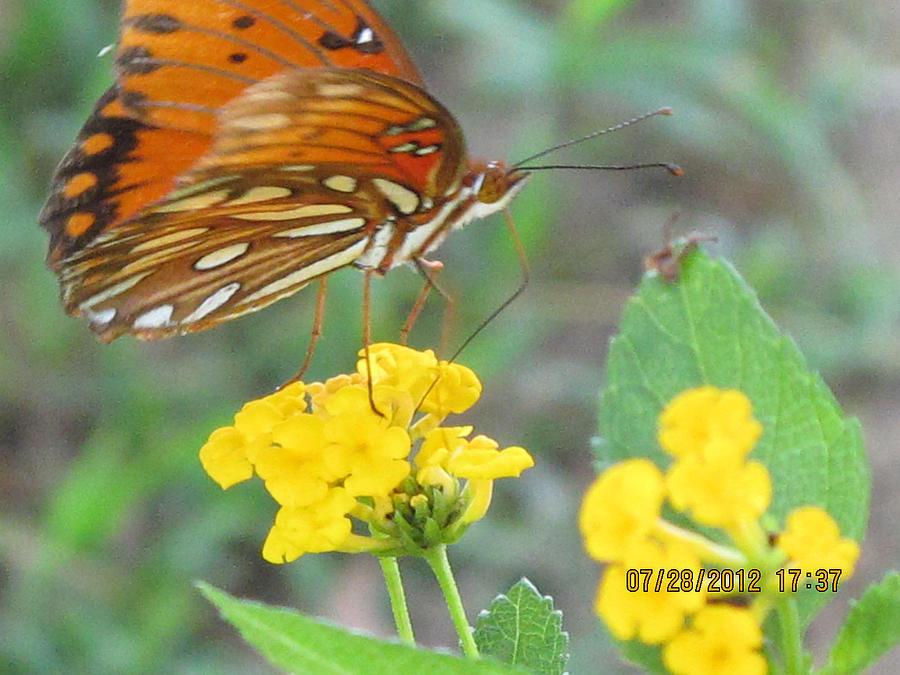 Butterfly Pyrography - Tiny Feet by Bettye Gilbert