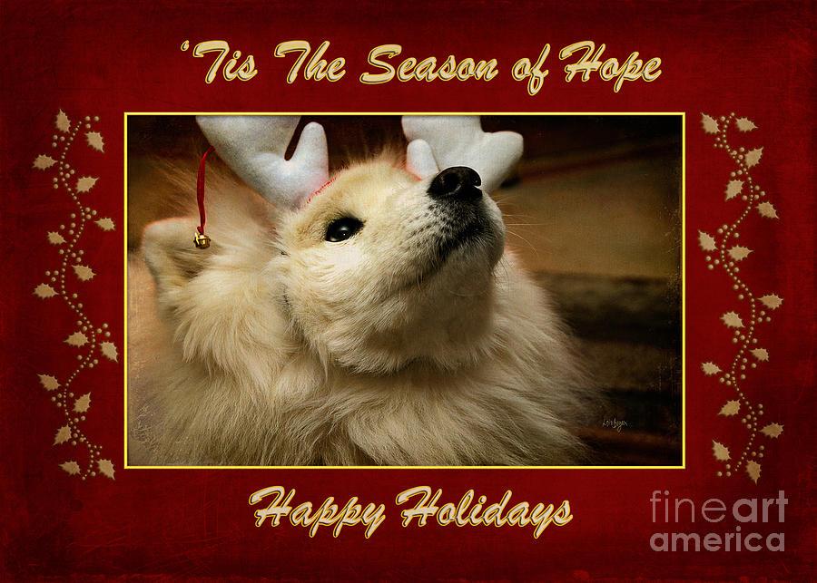 tis The Season Of Hope Happy Holidays Photograph