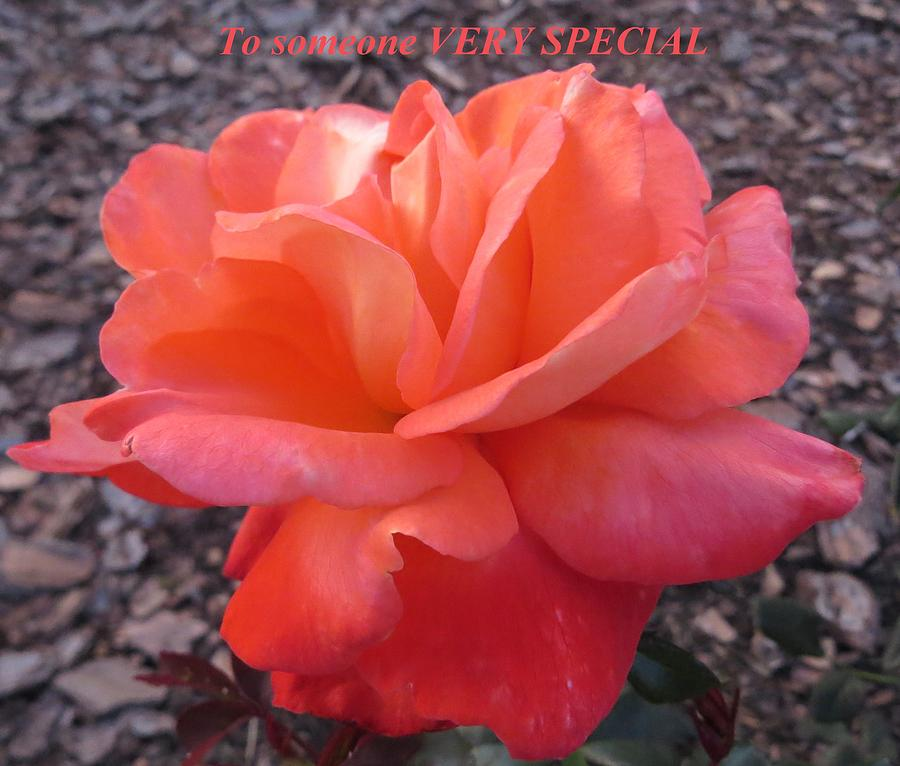 To Someone Very Special Photograph  - To Someone Very Special Fine Art Print