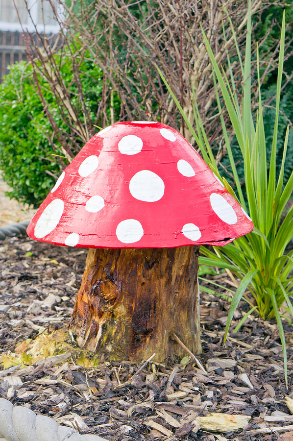 Toadstool Photograph
