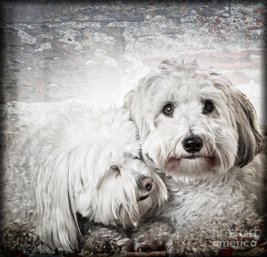 Dogs Photograph - Together by Elena Elisseeva