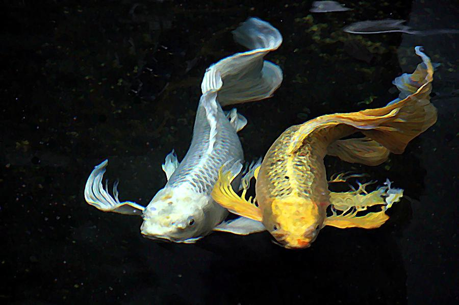 Togetherness in love koi fish photograph by emma wang for American koi fish