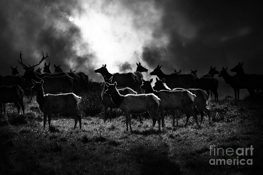 Tomales Bay Harem Under The Midnight Moon - 7d21241 - Black And White Photograph