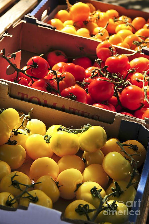 Tomatoes On The Market Photograph  - Tomatoes On The Market Fine Art Print