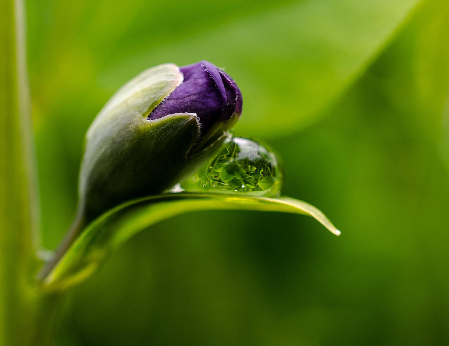 Topsy Turvy World In A Raindrop Photograph  - Topsy Turvy World In A Raindrop Fine Art Print