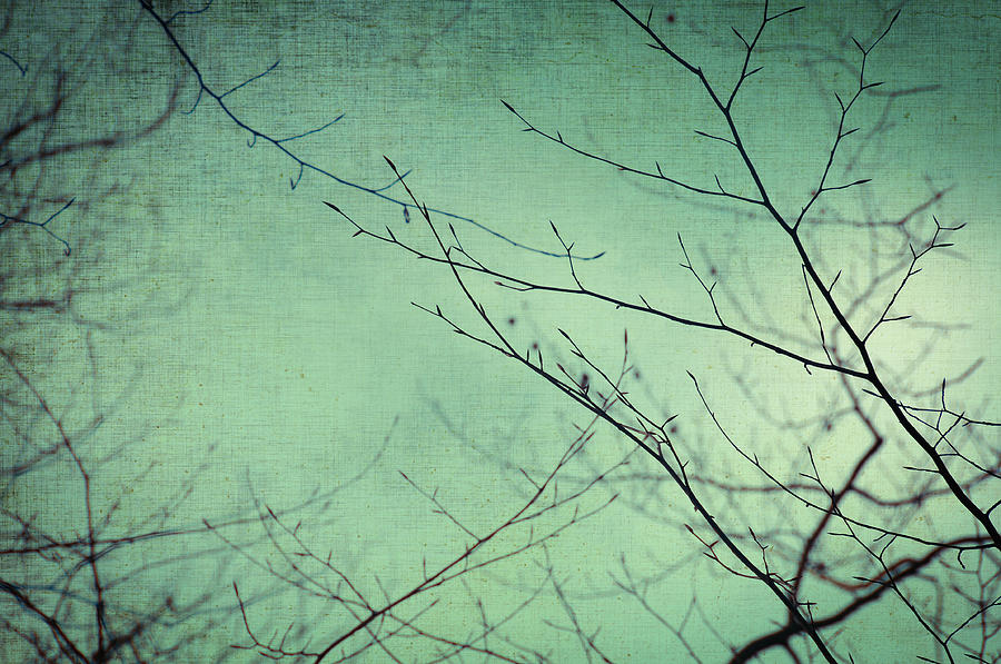 Branches Photograph - Touching The Sky by Taylan Soyturk
