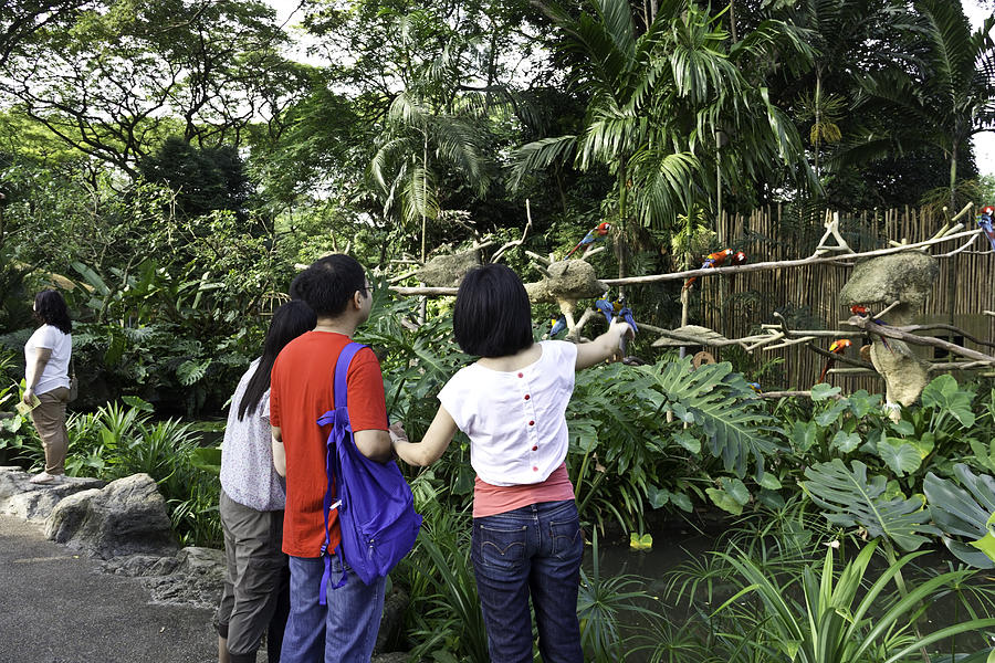Tourists Viewing The Colorful Birds Photograph