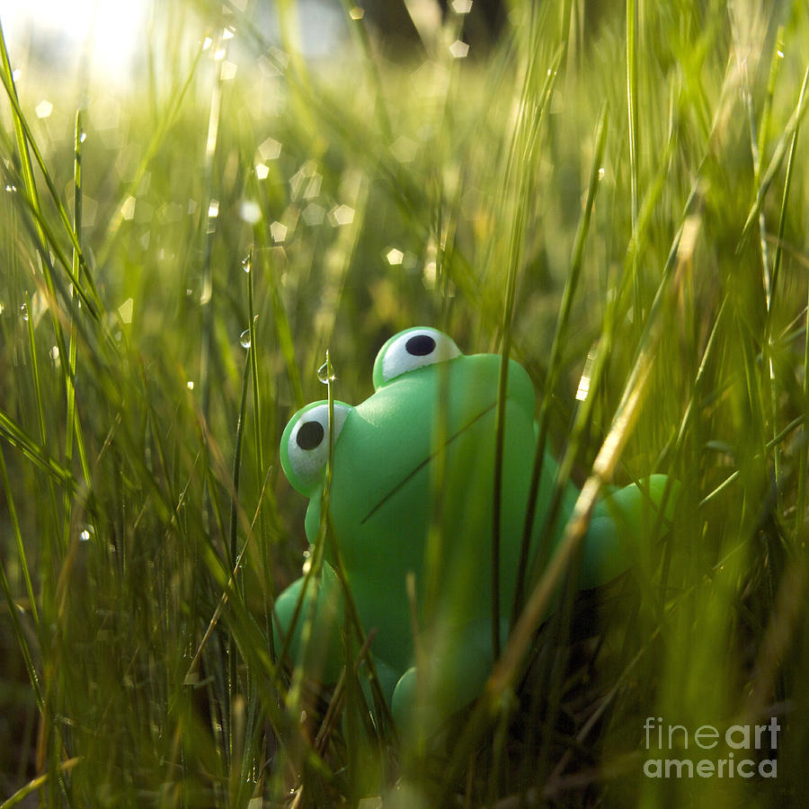Toy Frog In The Wet Grass Photograph