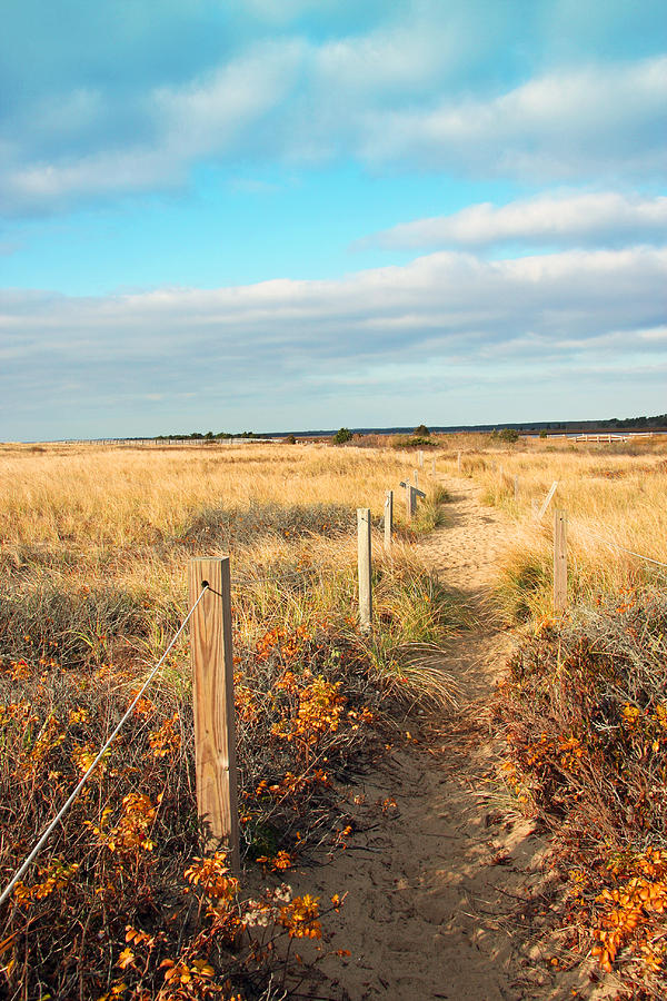 Trail By The Sea Photograph  - Trail By The Sea Fine Art Print