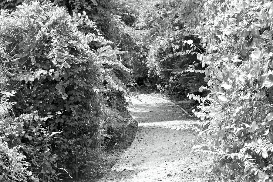 Trail In Black And White Photograph