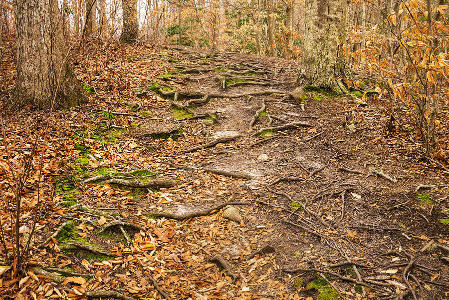 Trail In Ryder Conservation Land Photograph