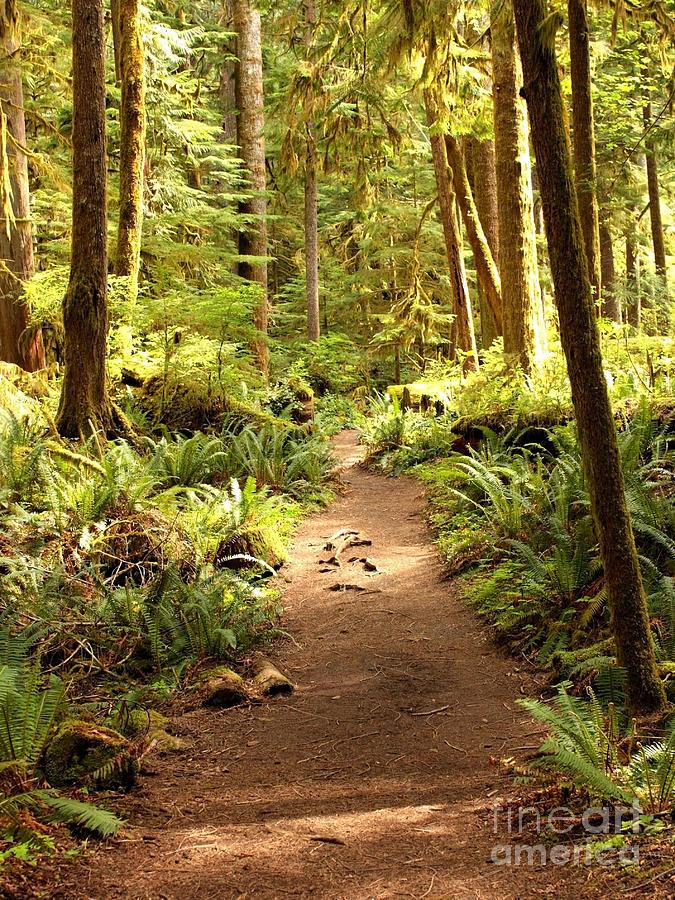 Trail Through The Rainforest Photograph