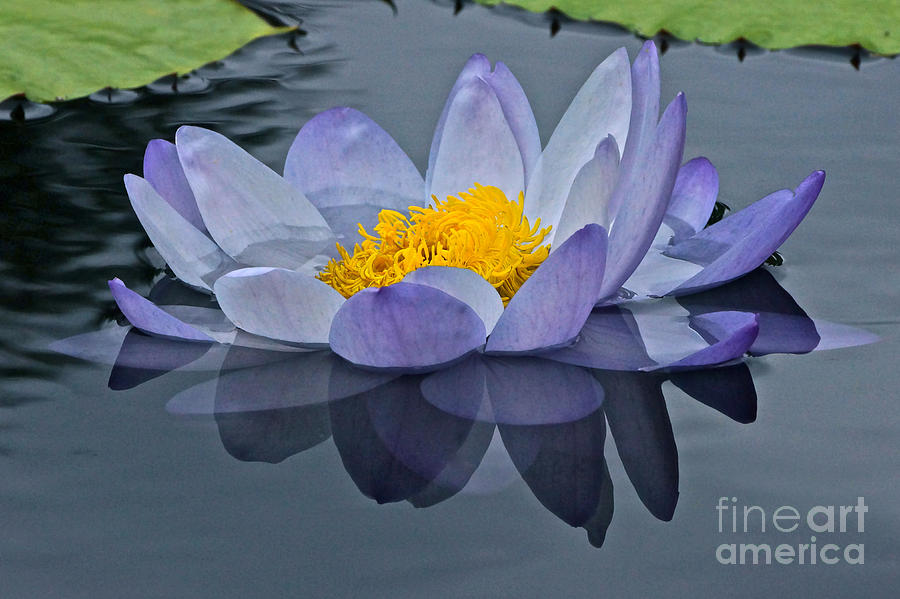 Tranquility Photograph - Tranquility by Byron Varvarigos